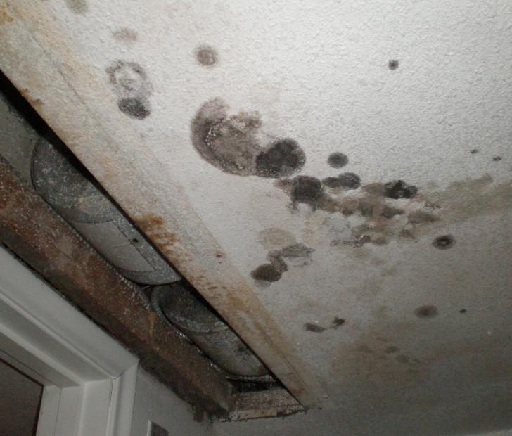 mold toxiciy